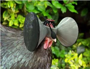 Oculus Rift для кур